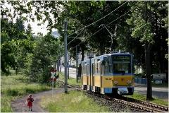 Meine letzten Fotos von der Waldbahn entstanden noch bei Schneefall. Nach längerer Pause nun wieder einmal ein sommerliches Foto: Tw 305 in Tabarz. (Juni 2005)