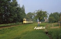 """Jetzt entschieden Sekunden über das Gelingen des Motivs """"Straßenbahn mit Gänsen"""". Gänse sind schlaue Tiere und kennen den Weg zum Stall"""