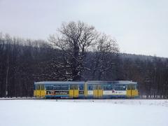 tw-442_marienglashoehle-alte-eiche_23-03-2013_c-hartung