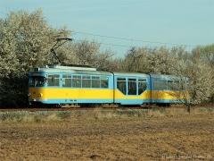 Frühlingsbote | Tw 505 | (c) U. Kutting