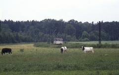 Drei Raufutter verzehrende Großvieheinheiten finden die Waldbahn uninteressant.